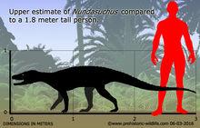 Nundasuchus-size