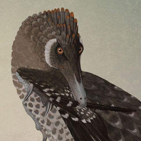 El velociraptor ha sido representado durante mucho tiempo como una criatura escamosa. Todo eso está cambiando a medida que la evidencia fósil muestra cuán extendidas están las plumas entre los dinosaurios. <i>Preening velociraptor illustration by John Conway.</i>