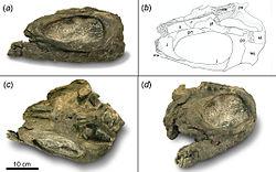 250px-Shastasaurus pacificus