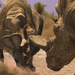 Dos Embolotherium peleando por el territorio