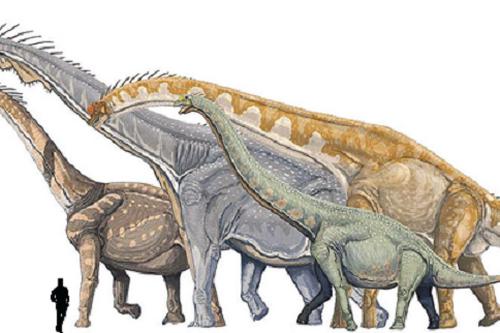 Wiki Prehistórico