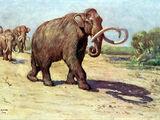 Mammuthus columbi