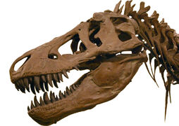 Cráneo T- rex