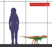 Aviatyrannis estimated size 01