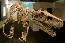 Herrerasaurus-0