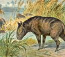 Merycoidodon