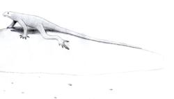 Bavarisaurus