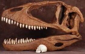 310px-Carcharodontosaurus Skull