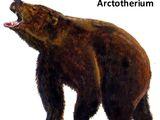 Arctotherium