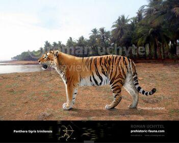 Panthera-trinilensis-738x591