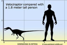 Velociraptor size