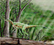 Eoraptor NT