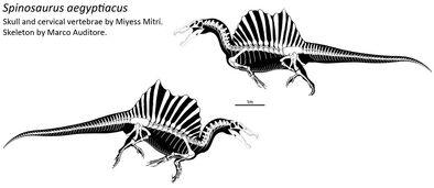 Spinosaurus skeletal by thedinorocker-d8hxlv2