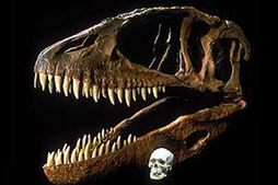 Carcharodontosaurus-ps carchar twoskulls 030603
