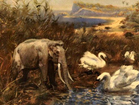 Image result for palaeoloxodon mnaidriensis