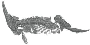 Druckenmilleretal 2012 cryopterygius