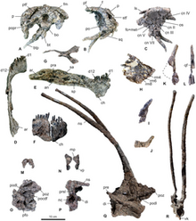 245px-Skeletal elements of Bajadasaurus