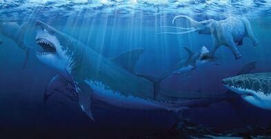 Sharks-megalodon-giant