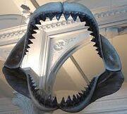 Megalodon mandibula