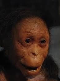 Australopithecus bebe