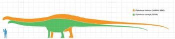 Diplodocus scale