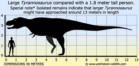 Tyrannosaurus-size