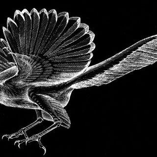Ilustración de un Archaeopteryx por Jane Kim.