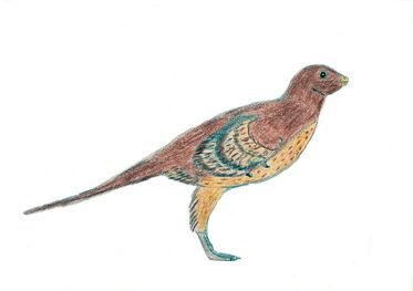 Eosinopteryx-0