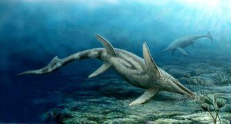 Shastasaurus Group