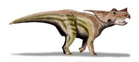 Achelousaurus2