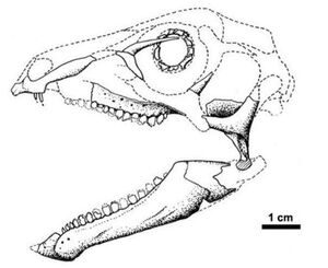 Abrictosaurus cráneo