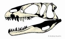 Dubreuillosaurusskull atuchin