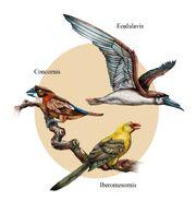 Ocells ibèrics