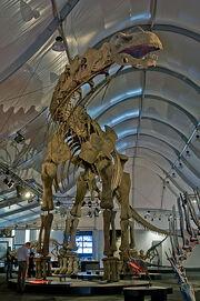 Argentinosaurus DSC 2943
