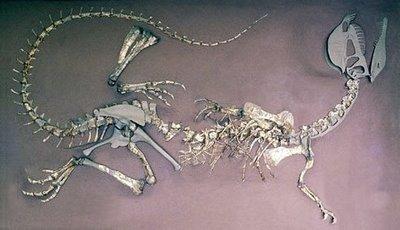 Dilophosaurus esqueleto