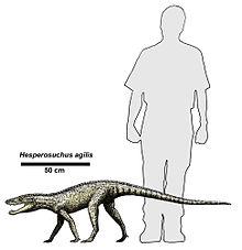 220px-Hesperosuchus