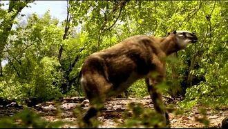 Caminando Entre las Bestias Cap. 3 Pequueño Gigante