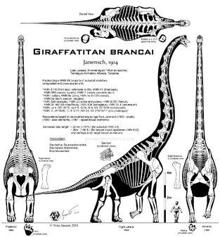 Giraffatitan esqueleto