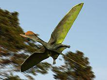 220px-Darwinopterus NT