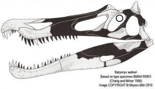 Baryonyx skull by miyess d2tpyw7-250t