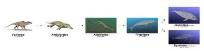 Cetacea evolución