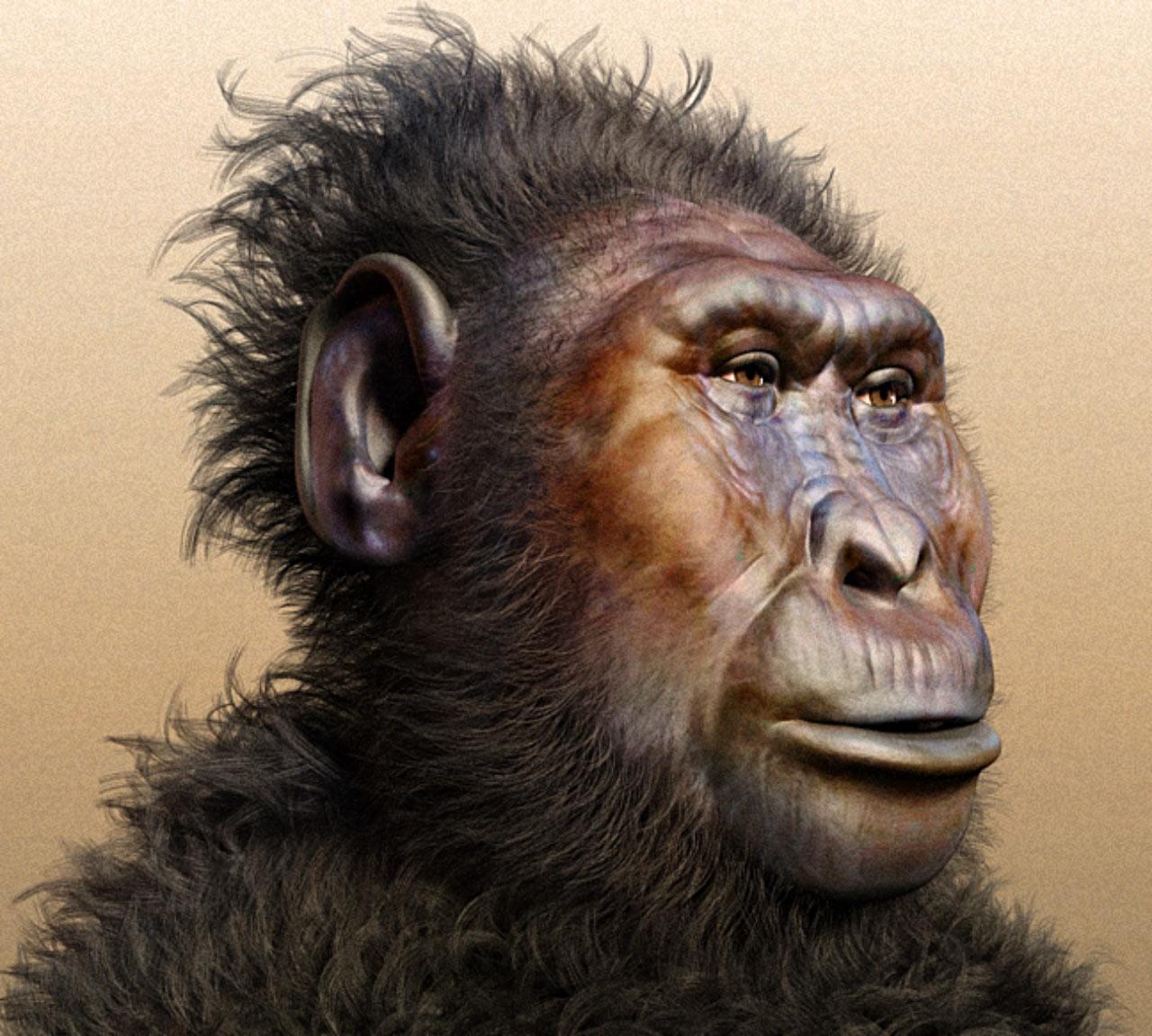 Resultado de imagen para Paranthropus Boisei
