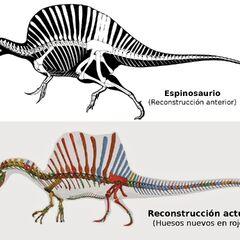 thumb|225x225px|Esqueletos de <i>Spinosaurus</i>