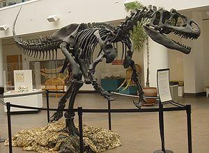Allosaurus esqueleto