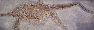 Ichthyosaurus dando a luz