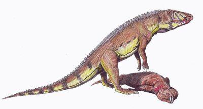 800px-Ornithosuchus1DB