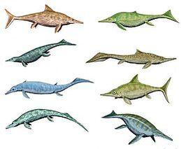 260px-Ichthyosaurios5