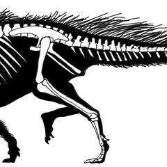 Esqueleto de Heterodontosaurus que muestra un posible plumaje