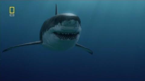 Depredadores prehistóricos (Tiburón monstruoso)