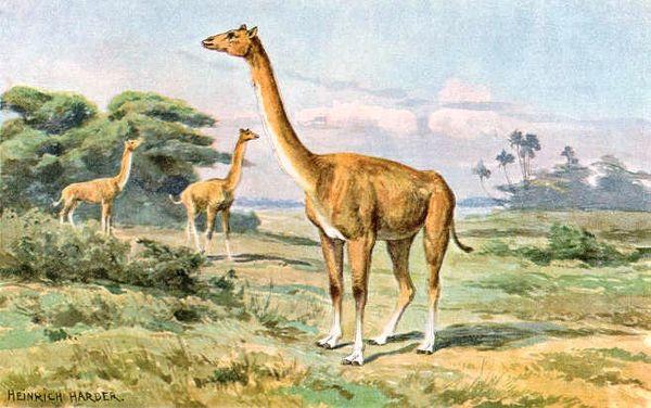 600 x 376 jpeg 54kBPurussaurus